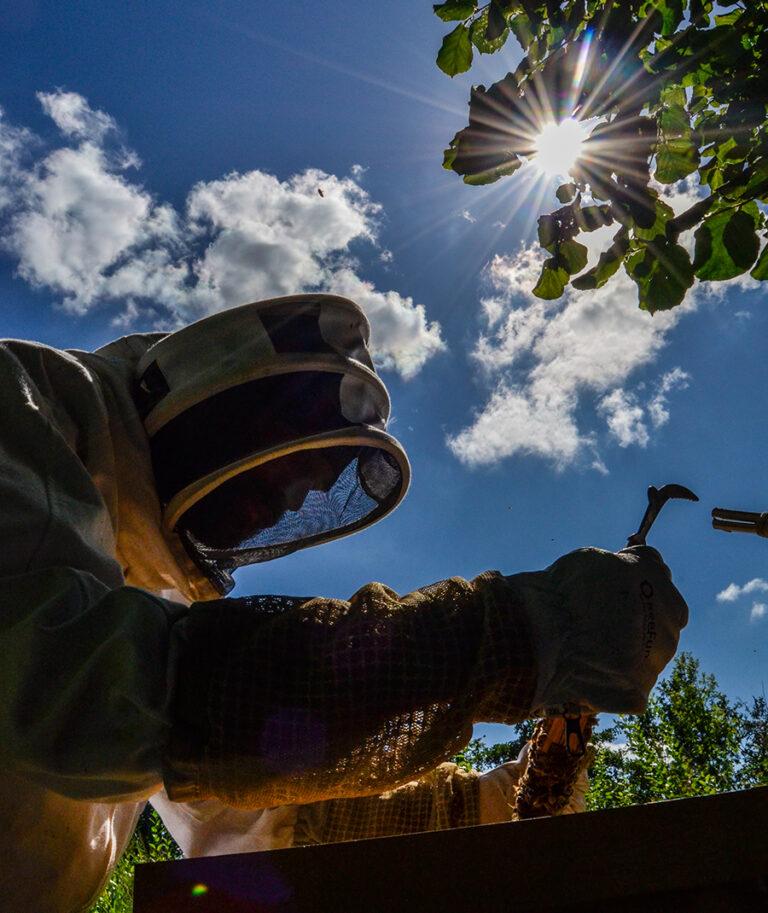aspirant_imker, beginnen_met_imkeren, werken met de bijen