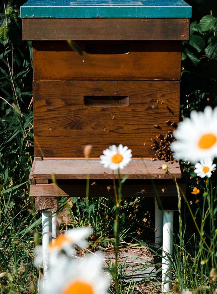 aspirant_imker, beginnen_met_imkeren, bijenkast