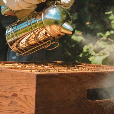 gereedschap; beroker; rook; bijenkast