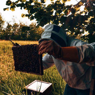 imker; controle; bijenkast; bijenkasten; raat; honingraat; raam; gereedschap; raampjeslichter; veld; landschap; voorjaar; lente; zon